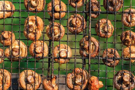 broiled: Appetizing broiled mushrooms on a grill on a picnic in nature
