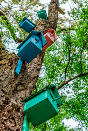Colorful dyed wooden nestling boxes on tree trunk in summer park. Outdoor creative art decoration and care for birds. Archivio Fotografico