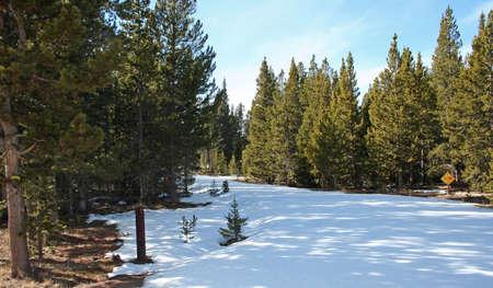 winter snow path in evergreens