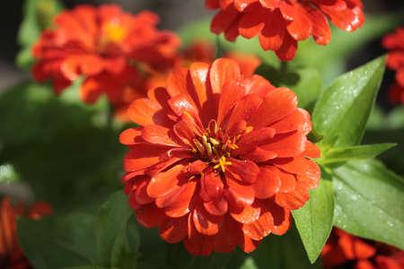 Bright Flower After Rain