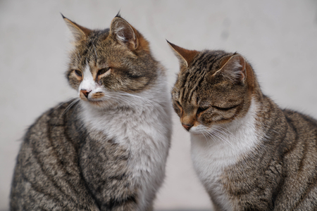 Two lovely brown cat sitting side by side 写真素材