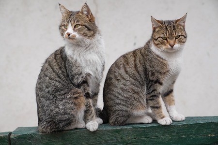 Two lovely brown cat sitting side by side Фото со стока