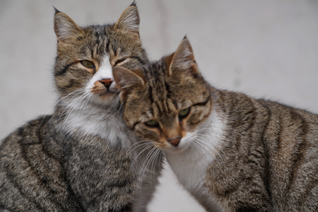 Two brown cats sitting and snuggling each other Фото со стока - 98092276