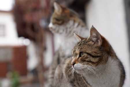 Two lovely brown cat sitting side by side Stock Photo