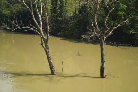 Dead two trees in the river bed after flood