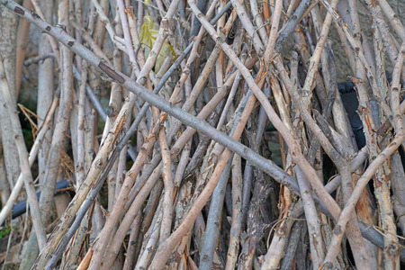 Dry colorful branches, sticks background