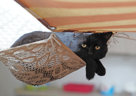 Black cat lying down on fabric which is  hanged in the air under tent