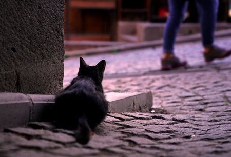 Rear view of a black cat watching street behind the wall.
