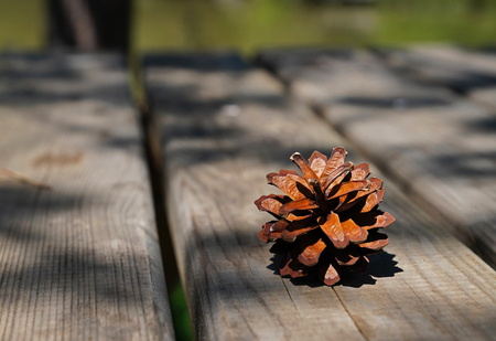Pine cone on a rustic old wooden table and blurred green lake in background