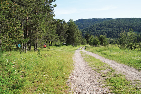 Campground in a pine forest near path Stok Fotoğraf