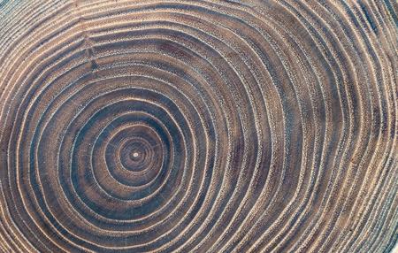 Texture de coupe en bois gros plan