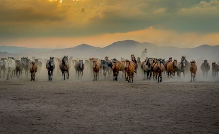 Western cowboy riding horses with in cloud of dust in the sunset Banque d'images - 132904226