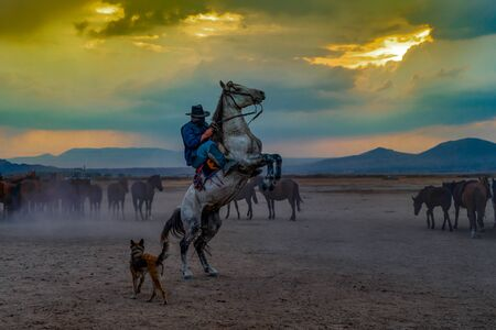 Western cowboys riding horses with dog in dusts. Horse standing on its hind legs with cowboy.