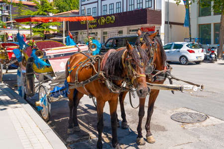 Amasya/Turkey- August 09 2019: Horses close up. Animals for the transportation of tourists.