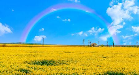 Yellow canola fields with beautiful panoramic view under rainbow near Sakarya River, Polatli, Ankara
