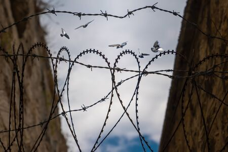 Barbed wire heart shape and blurred pigeons flying behind barbed wire. Concept of hope of freedom.