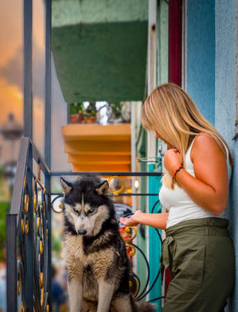 Batumi, Adjara/Georgia - August 05 2019:  Wolf or husky sitting in front of a house and unidentified girl looking at dog.,