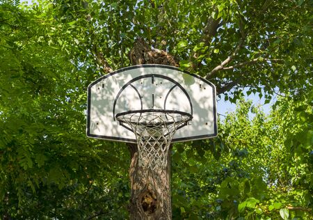 Basketball hoop hung on (attached) a green tree trunk