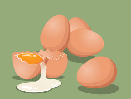 Vector illustration of fresh chicken eggs and crack egg with yolk and eggshell on light green background. Baking and cooking Ingredients. Healthy organic food.