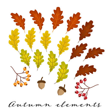 Set of colorful oak leaves, acorns and berries isolated on white background. Simple cartoon autumn elements flat style. Vektorové ilustrace