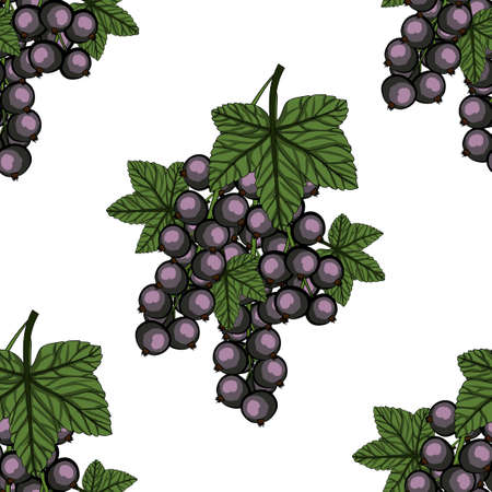 Seamless pattern with Blackcurrant with green stem and leaves. Vector illustration.