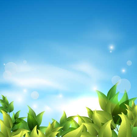 zomer achtergrond met groene bladeren tegen de hemel.