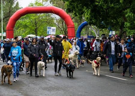 The start of the SPCA Doggy Dash in Sacramento - 482017