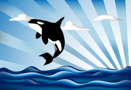 killer: Orcinus orca Killer whale jumping high