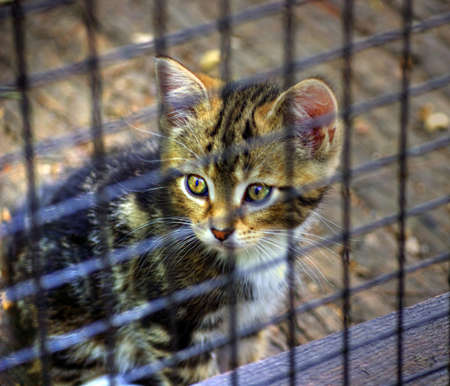 Lonely cat captured in a cage, High dynamic range photo