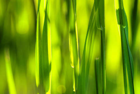 Close-up of summer light that shines through the blades of grass Stock Photo