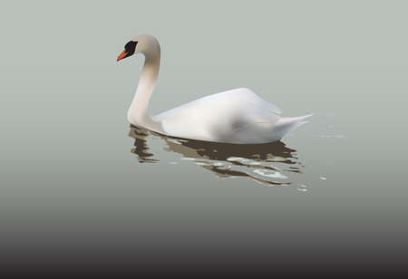 Evocative image of lonely swan swimming in still water Vector