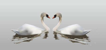 innamorati che si baciano: Due cigni che formano un cuore con le loro collo, simbolo di amore Vettoriali