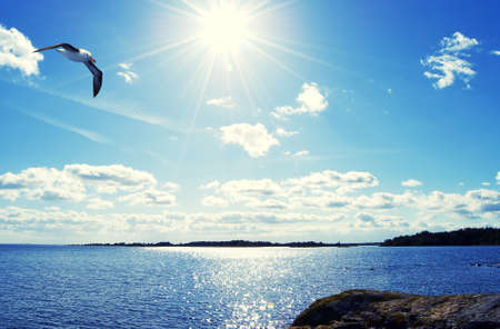 Seagull floating in the sea landscape, photography and illustration Stock Illustration - 11317395