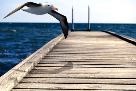 Seagull floating in the sea landscape over a jetty, photography and illustration Stock Illustration - 11317394