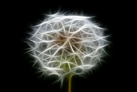 special effects: abstract dandelion, photo with graphic special effects