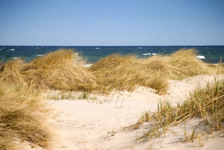 sawgrass: a windy day at the beach, sand dunes against the waves Stock Photo