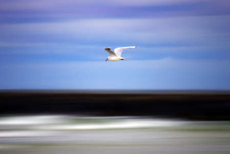 Seagull with colorful clouds and pier in background, motion blurred  Stock Photo - 19497346
