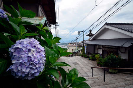 A hydrangea and Shinto shrinee Stock Photo