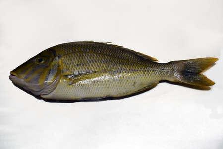 species of emperor fish