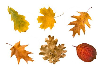 dry leaf: Collection of autumn leaves