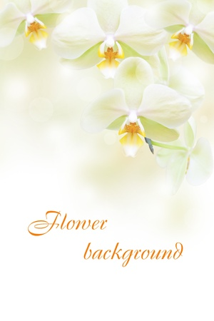 artificial flowers: Flower background