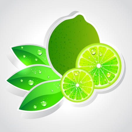 lime fruit: lime Illustration