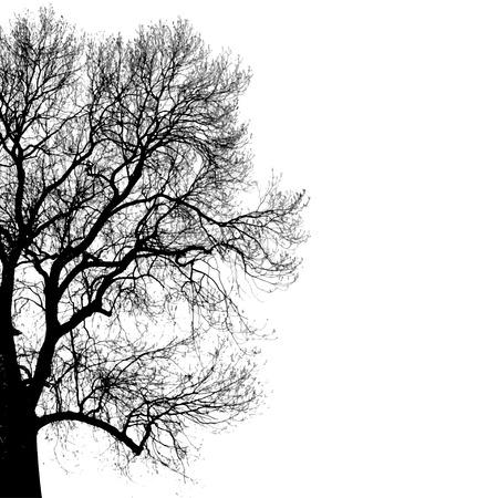 나무의 검은 실루엣 일러스트