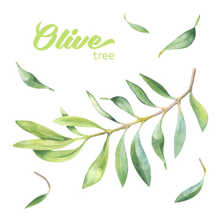 Green watercolor olive branch on white background