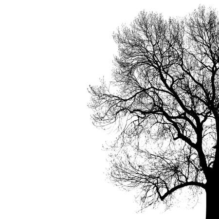 Vector black silhouette of tree 일러스트