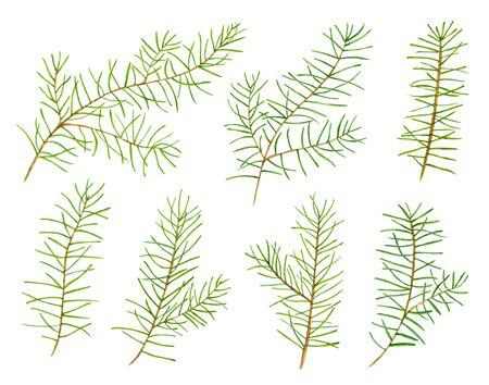 christmas element: Set of 7 green watercolor pine branches  for your design