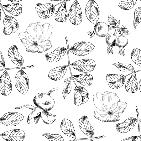 Seamless sketch briar template background. Vector illustration for your design