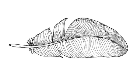 Isolated on white background Feather ink sketch.