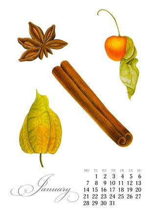 Elegant printable calendar 2019. January. Watercolor winter cherry, badian, cinnamon. Botanical art. Template for a banner, notebook, cosmetics, perfume or invitation Stock Photo