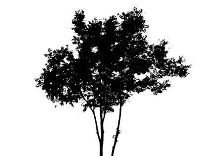 Black tree silhouette. Isolated on white background. Vector nature illustration for your design Ilustração